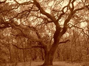 blog-tree5.jpg