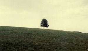 sfu_tree_02